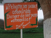 Attention aux crocodiles